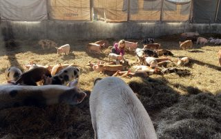 Girl tending to pigs