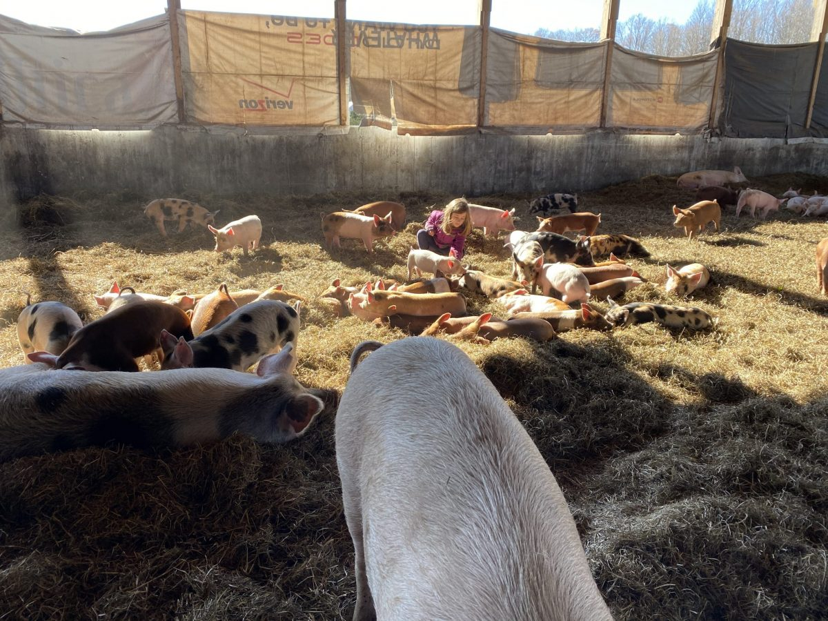 Girl tending to pigs