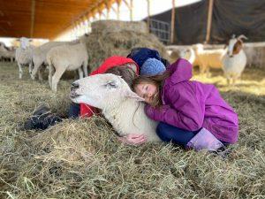 girls cuddling ewe in barn