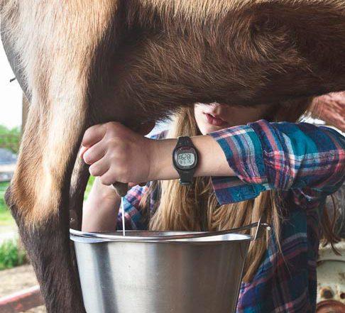 girl milking goat