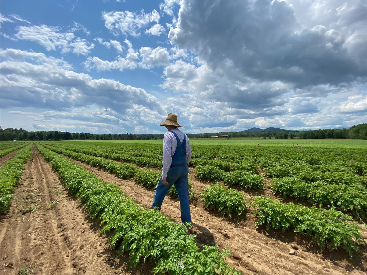 farmer walking among rows of vegetables with bright blue skies and puffy clouds